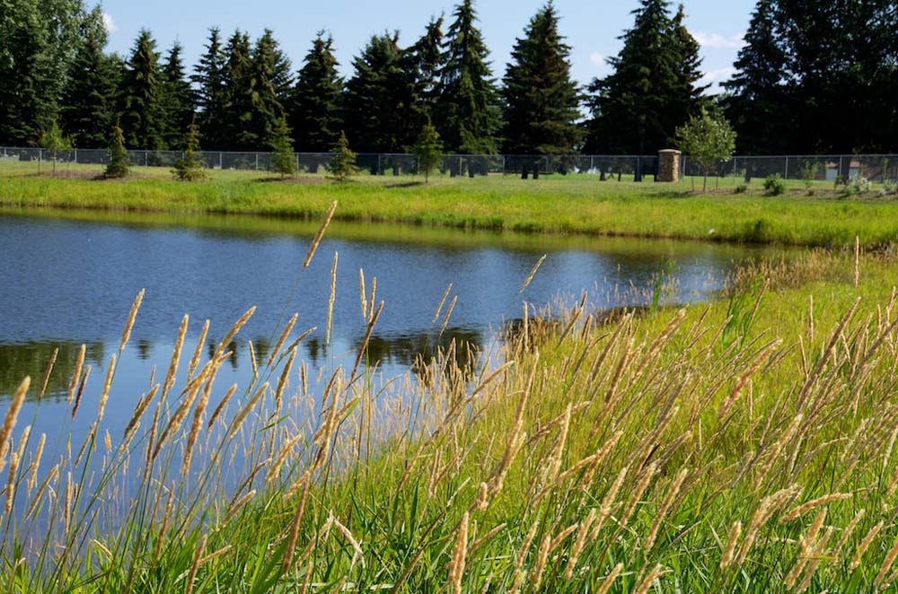 Alberta grasses line the edge of this pond in the community of Jesperdale. Residents enjoy communities full of amenities.